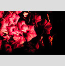 Frank Titze, Ulm/Germany - No. 298 : Film 3:2 I - Red Flower II - 959x640 Pixel - 198 kB