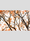 Frank Titze, Ulm/Germany - No. 3047 : Y 2015-04 - Orange Tree - 959x640 Pixel - 1198 kB