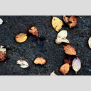Frank Titze, Ulm/Germany - No. 3063 : Y 2015-04 - Leaves on Dirt - 959x640 Pixel - 949 kB