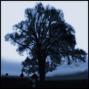 Frank Titze, Ulm/Germany - No. 3071 : Y 2015-04 - Tree aside of Street - 640x640 Pixel - 459 kB