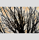 Frank Titze, Ulm/Germany - No. 3152 : Y 2015-05 - Branches - 959x640 Pixel - 1004 kB