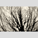 Frank Titze, Ulm/Germany - No. 3154 : Y 2015-05 - Grey Branches - 959x640 Pixel - 558 kB