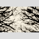 Frank Titze, Ulm/Germany - No. 3156 : Y 2015-05 - Between Branches - 959x640 Pixel - 373 kB