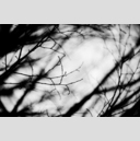 Frank Titze, Ulm/Germany - No. 3158 : Y 2015-05 - Left Branches - 959x640 Pixel - 242 kB