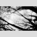 Frank Titze, Ulm/Germany - No. 3159 : Y 2015-05 - Right Branches - 959x640 Pixel - 233 kB