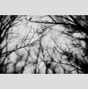 Frank Titze, Ulm/Germany - No. 3161 : Y 2015-05 - Dark Day Branches I - 959x640 Pixel - 285 kB