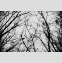 Frank Titze, Ulm/Germany - No. 3162 : Y 2015-05 - Dark Day Branches II - 959x640 Pixel - 308 kB