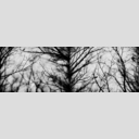 Frank Titze, Ulm/Germany - No. 3163 : Non Common II - Dark Day Branches - 960x318 Pixel - 191 kB