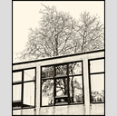 Frank Titze, Ulm/Germany - No. 3207 : Rect 5:4 I - Interrupted Tree - 514x640 Pixel - 349 kB