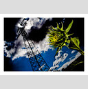 Frank Titze, Ulm/Germany - No. 320 : Y 2012-09 - Sunflower I - 920x640 Pixel - 214 kB
