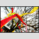 Frank Titze, Ulm/Germany - No. 3228 : Y 2015-06 - Ribbons in the Tree IV - 947x640 Pixel - 832 kB