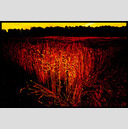 Frank Titze, Ulm/Germany - No. 327 : Film 3:2 I - Red Corn - 947x640 Pixel - 453 kB