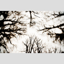 Frank Titze, Ulm/Germany - No. 3282 : Film 3:2 VI - Darktrees I - 959x640 Pixel - 736 kB