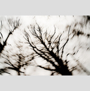 Frank Titze, Ulm/Germany - No. 3284 : Film 3:2 VI - Darktrees III - 959x640 Pixel - 568 kB