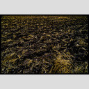 Frank Titze, Ulm/Germany - No. 328 : Film 3:2 I - No Corn - 947x640 Pixel - 564 kB