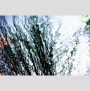 Frank Titze, Ulm/Germany - No. 3304 : Film 3:2 VI - Water Impression II - 959x640 Pixel - 992 kB