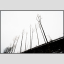 Frank Titze, Ulm/Germany - No. 3368 : Film 3:2 VI - Winter Grey II - 953x640 Pixel - 261 kB