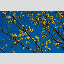 Frank Titze, Ulm/Germany - No. 3412 : Film 3:2 VI - Yellow on Blue - 959x640 Pixel - 833 kB
