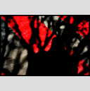 Frank Titze, Ulm/Germany - No. 3451 : Film 3:2 VI - Shadow on Red II - 947x640 Pixel - 555 kB