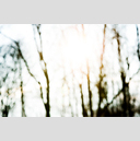 Frank Titze, Ulm/Germany - No. 3462 : Film 3:2 VI - Trees in Sun - 959x640 Pixel - 308 kB
