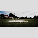 Frank Titze, Ulm/Germany - No. 347 : Y 2012-09 - Gaggle of Geese - 960x413 Pixel - 164 kB