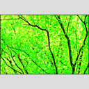 Frank Titze, Ulm/Germany - No. 3580 : Y 2015-10 - Green Leaves I - 955x640 Pixel - 1444 kB