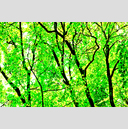 Frank Titze, Ulm/Germany - No. 3581 : Film 3:2 VI - Green Leaves II - 959x640 Pixel - 1482 kB