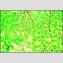 Frank Titze, Ulm/Germany - No. 3582 : Film 3:2 VI - Green Leaves III - 955x640 Pixel - 1137 kB