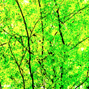 Frank Titze, Ulm/Germany - No. 3583 : Square 1:1 III - Green Leaves IV - 640x640 Pixel - 949 kB