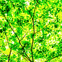Frank Titze, Ulm/Germany - No. 3584 : Square 1:1 III - Green Leaves V - 640x640 Pixel - 873 kB