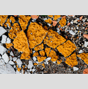 Frank Titze, Ulm/Germany - No. 3604 : Film 3:2 VI - Broken Orange Front I - 959x640 Pixel - 1145 kB