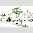 Frank Titze, Ulm/Germany - No. 3616 : Ulm Center - Green Tree on White - 959x640 Pixel - 499 kB