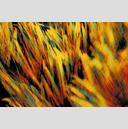 Frank Titze, Ulm/Germany - No. 3699 : Film 3:2 VI - Corn Flames - 959x640 Pixel - 834 kB