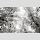 Frank Titze, Ulm/Germany - No. 3731 : Film 3:2 VI - Grey Leaves - 959x640 Pixel - 548 kB