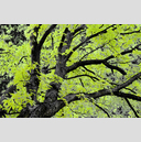 Frank Titze, Ulm/Germany - No. 3732 : Film 3:2 VI - Green Leaves - 959x640 Pixel - 961 kB
