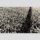 Frank Titze, Ulm/Germany - No. 3780 : Film 3:2 VII - Wheat Path III - 959x640 Pixel - 929 kB