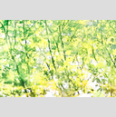 Frank Titze, Ulm/Germany - No. 3852 : Film 3:2 VII - Watercolor Branches I - 959x640 Pixel - 952 kB