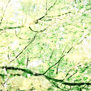 Frank Titze, Ulm/Germany - No. 3853 : Square 1:1 III - Watercolor Branches II - 640x640 Pixel - 639 kB