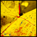 Frank Titze, Ulm/Germany - No. 3878 : Square 1:1 III - Colorzized Leaf II - 640x640 Pixel - 379 kB
