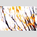 Frank Titze, Ulm/Germany - No. 3889 : Film 3:2 VII - Branches I - 959x640 Pixel - 627 kB