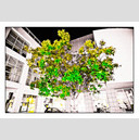 Frank Titze, Ulm/Germany - No. 388 : Ulm Center - Tree at Night - 922x640 Pixel - 364 kB