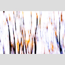 Frank Titze, Ulm/Germany - No. 3890 : Film 3:2 VII - Branches II - 959x640 Pixel - 450 kB