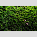 Frank Titze, Ulm/Germany - No. 3966 : Film 3:2 VII - Grass - 959x640 Pixel - 1388 kB