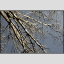 Frank Titze, Ulm/Germany - No. 3970 : Y 2016-03 - Winter Sun Tree - 953x640 Pixel - 990 kB