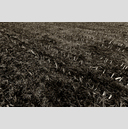 Frank Titze, Ulm/Germany - No. 3973 : Film 3:2 VII - Empty Field I - 959x640 Pixel - 922 kB
