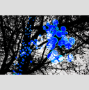 Frank Titze, Ulm/Germany - No. 3980 : Film 3:2 VII - Blue Lights II - 959x640 Pixel - 708 kB
