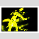 Frank Titze, Ulm/Germany - No. 398 : Non Common I - Yellow and Black II - 922x640 Pixel - 104 kB