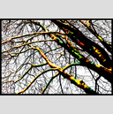 Frank Titze, Ulm/Germany - No. 4056 : Y 2016-04 - Winter Trees I - 947x640 Pixel - 942 kB