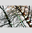 Frank Titze, Ulm/Germany - No. 4057 : Y 2016-04 - Winter Trees II - 959x640 Pixel - 1163 kB