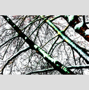 Frank Titze, Ulm/Germany - No. 4058 : Y 2016-04 - Winter Trees III - 959x640 Pixel - 1044 kB
